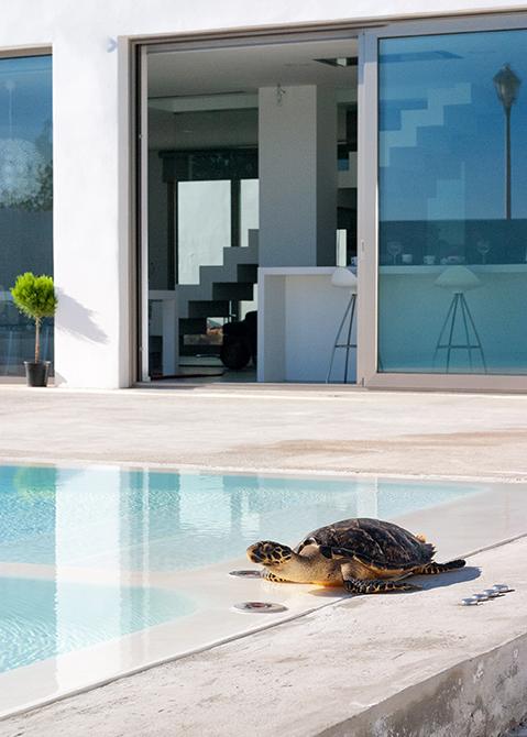 Piscina de microcemento blanco en casa minimalista con tortuga | Chiralt arquitectos Valencia
