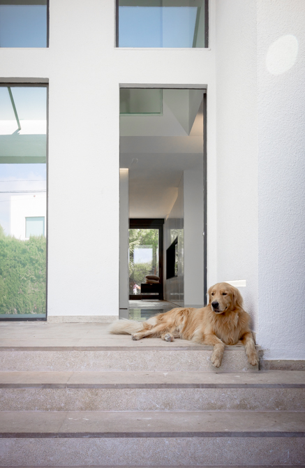 Entrada con escaleras y perro en vivienda mediterranea. Chiralt Arquitectos Valencia