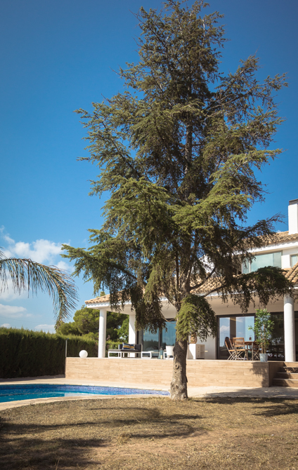 Jardín y árbol en vivienda mediterranea. Chiralt Arquitectos Valencia